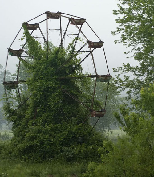 Ferris Wheel Covered In Moss