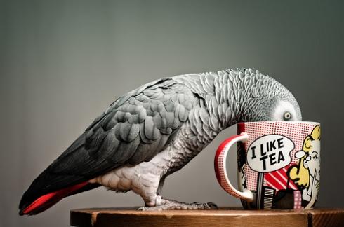 Parrot Drinking From Mug