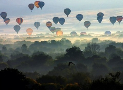 Hot Air Ballons Over Forest