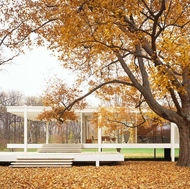 Arch - Tree, Fall.jpg