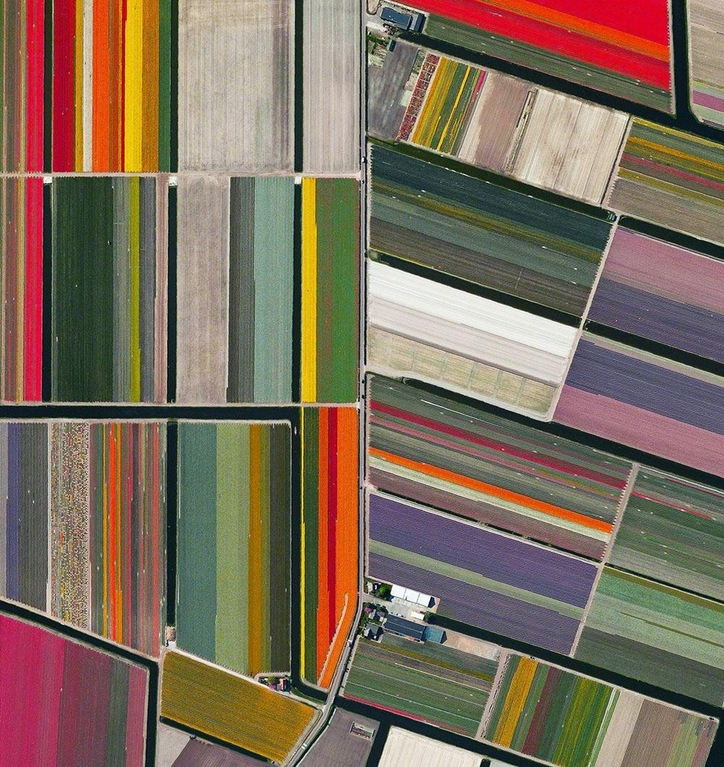 Netherlands - Tulip Fields, Satellite Photo.jpg