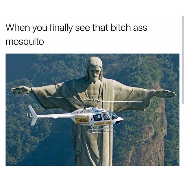 Funny - Mosquito.jpg
