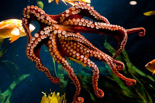 Animals - Octopus.jpg