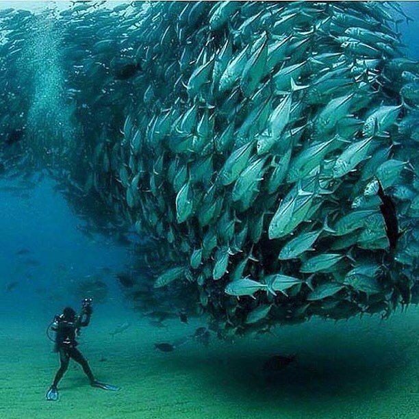 Photography - Oktavio Aburto, Fish, Blue.jpg