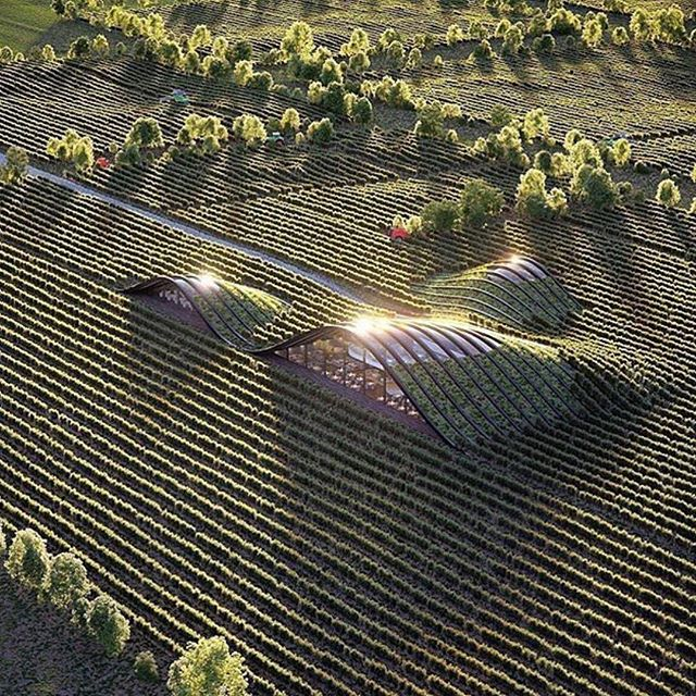 Architecture - Futuristic Vineyard, Georgia, Tbilsi, X Architecture.jpg