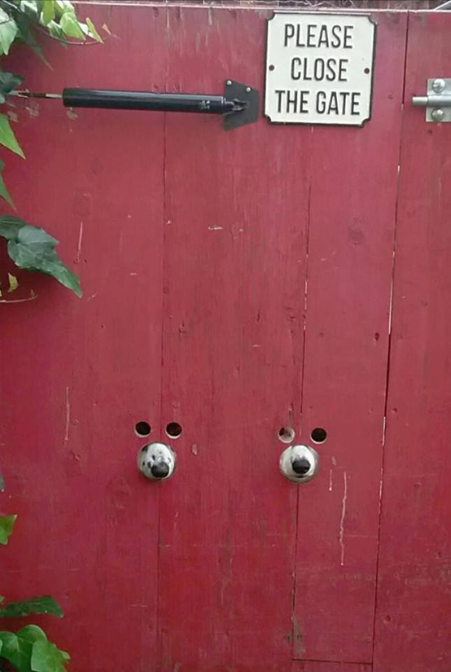 Animals - Dogs, Please Close the Gate.jpg