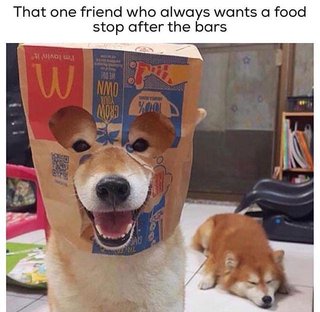 Funny - Drunk Dog, Food.jpg