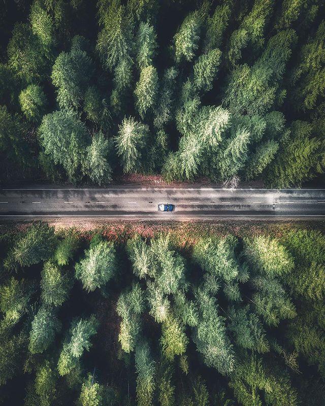 Photography - Jr Higz, Forest, Green.jpg