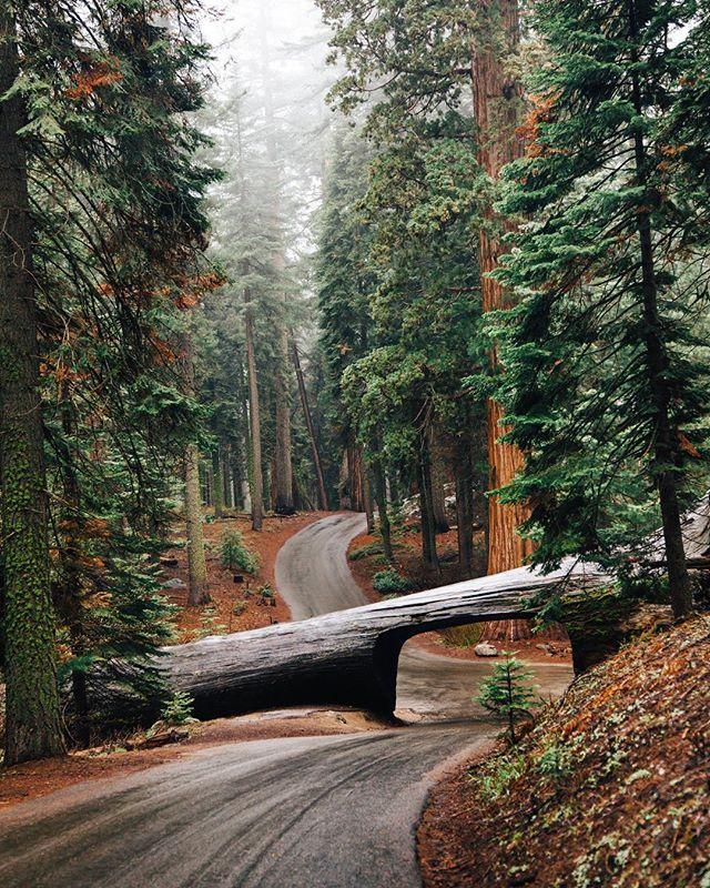Photography - Logan Davidson, Tree, Brown.jpg