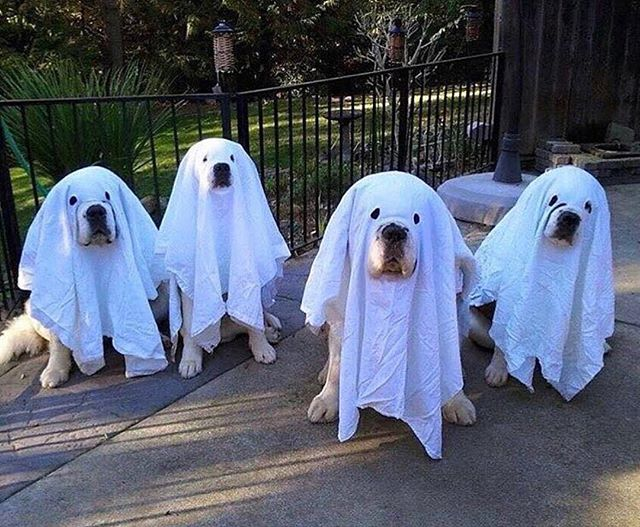 Animals - Dog, Costumes.jpg