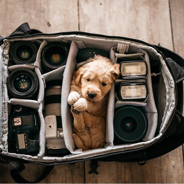 Animals - Dog, Camera, Black, Brown.jpg
