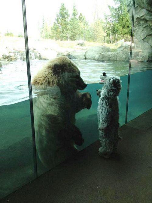 Kids - Polar Bear.jpg