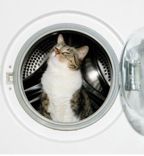 Animals - Cat, Washer, White.jpg