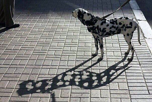 Animals - Dog, Art.jpg