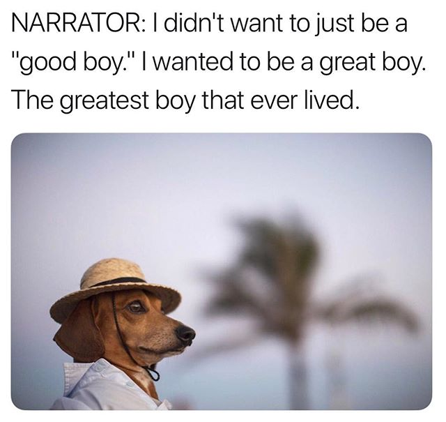 Funny - Dog, Good Boy.jpg