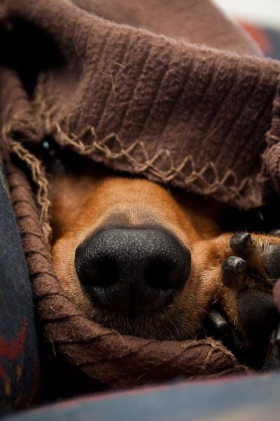 Animals - Dog, Sweater.jpg