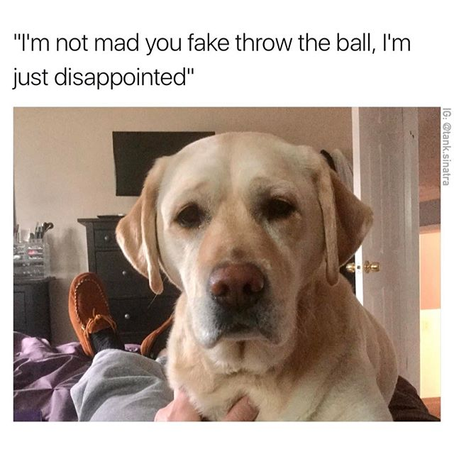 Animals - Dog, Disappointed.jpg