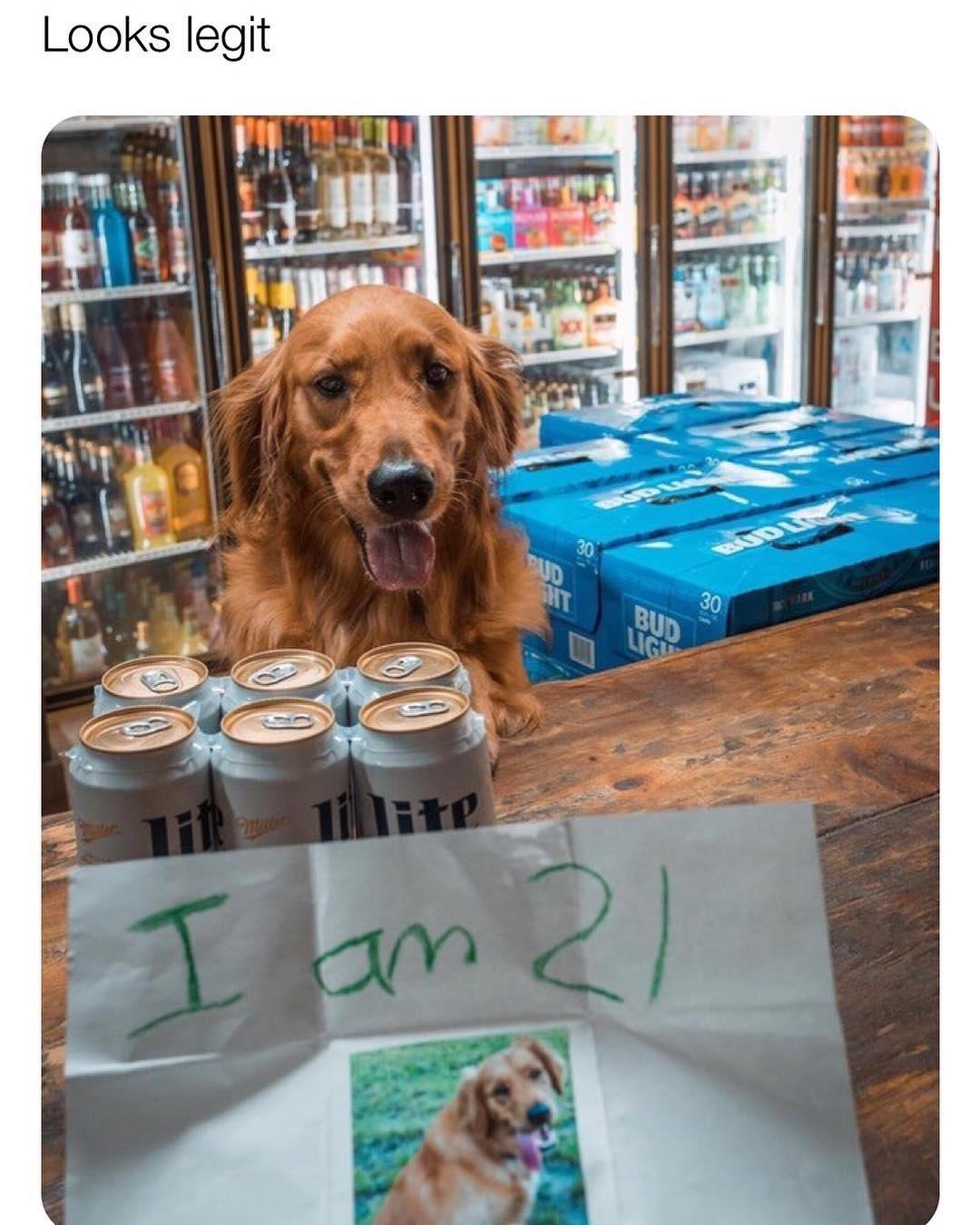Funny - Dog 21.jpg