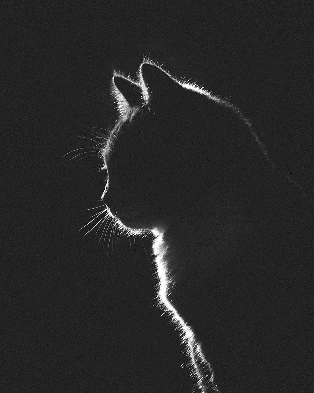 Animals - Gabriel Guerrero, Black & White, Cat.jpg
