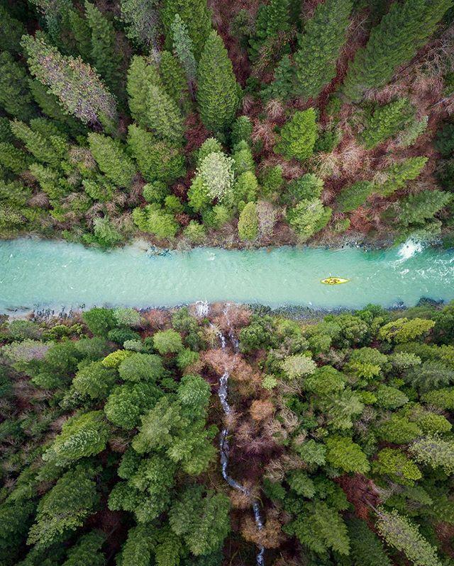 Photography - Niaz Uddin, Pacific Northwest, GReen.jpg